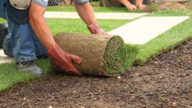 Многолетнюю газонную траву выращивают рядом с городом Щучинском
