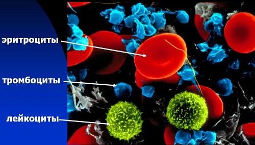 Общий анализ крови. Расшифровка, нормальные показатели. Нормы анализа крови у детей. Гемоглобин, эритроциты, лейкоциты, тромбоциты, нейтрофилы, эозинофилы, базофилы, лимфоциты,  MCH, MCHC, MCV, цветовой показатель — причины повышения или снижения показателей