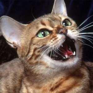 Говорящий кот - «Открой дверь!»