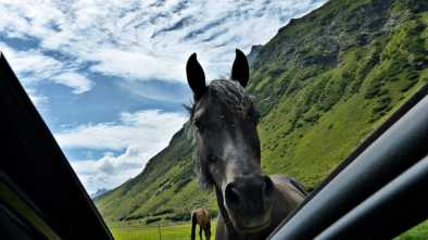 По скоростной трассе Астана – Бурабай скачут табуны лошадей