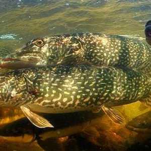 Запрет на рыбалку в Акмолинской области