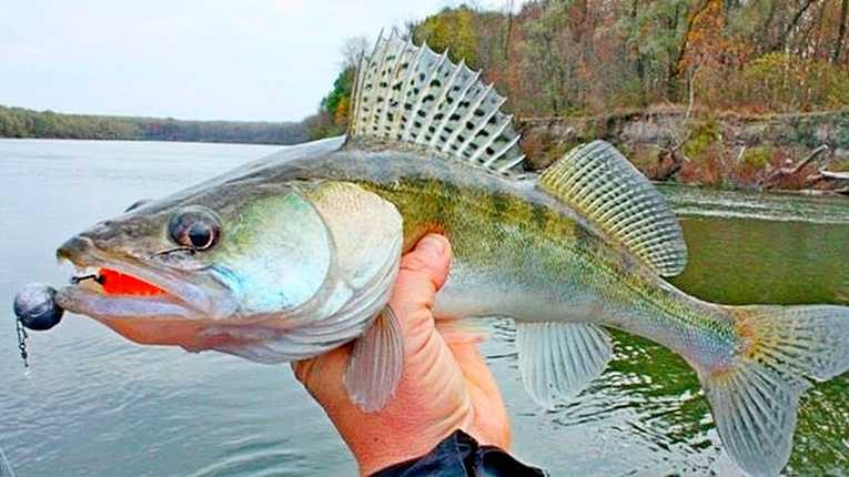Запрет на рыбалку в Северо-Казахстанской области