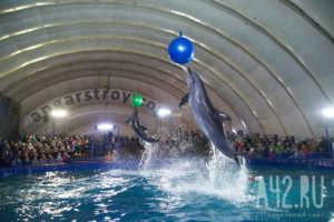 Дельфинарий в Боровом, дельфинарийв Бурабае