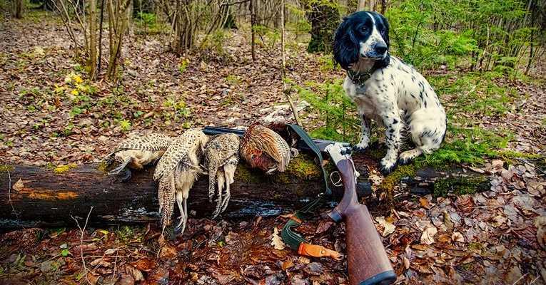 Открытие охоты в Казахстане осень 2020