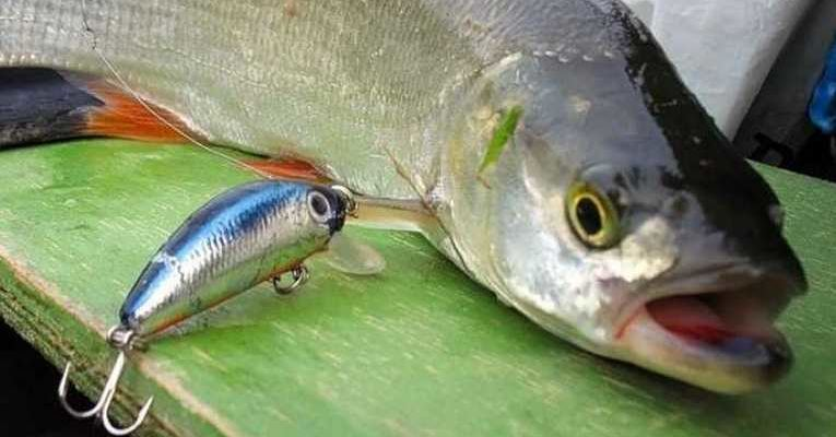 Запрет на рыбалку 2020 Казахстан. Нерестовый запрет 2020 по регионам казахстана.